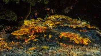 多媒体夜游活动-无锡梅园灯光节